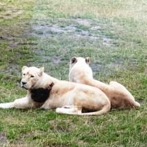 Safariland - Sommer-2019 - KiJu Neheim (5)