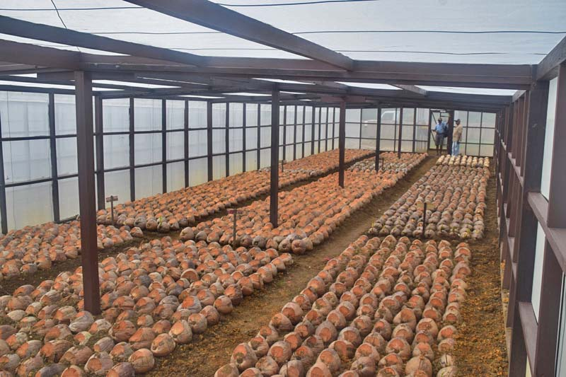 Southern Region Coconut Seedlings collection