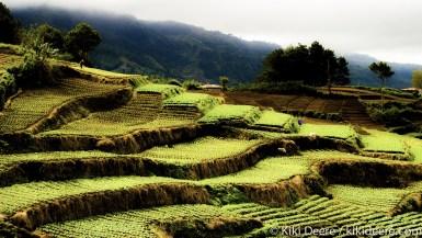 Vegetable Terraces, Philippines