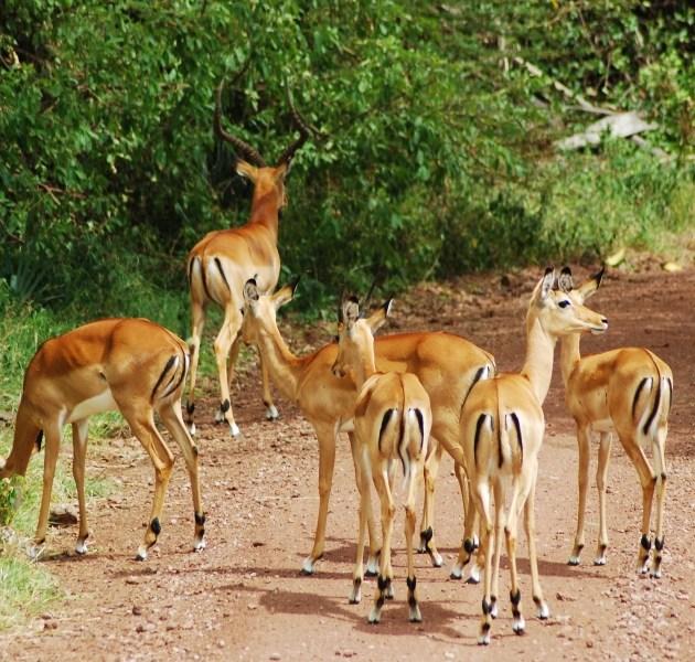 7 Day Northern Circuit Safari