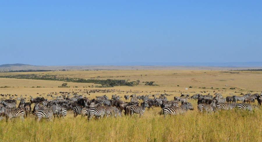 Wildlife Safaris Private Tours