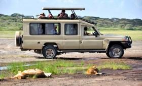 Safari joining group