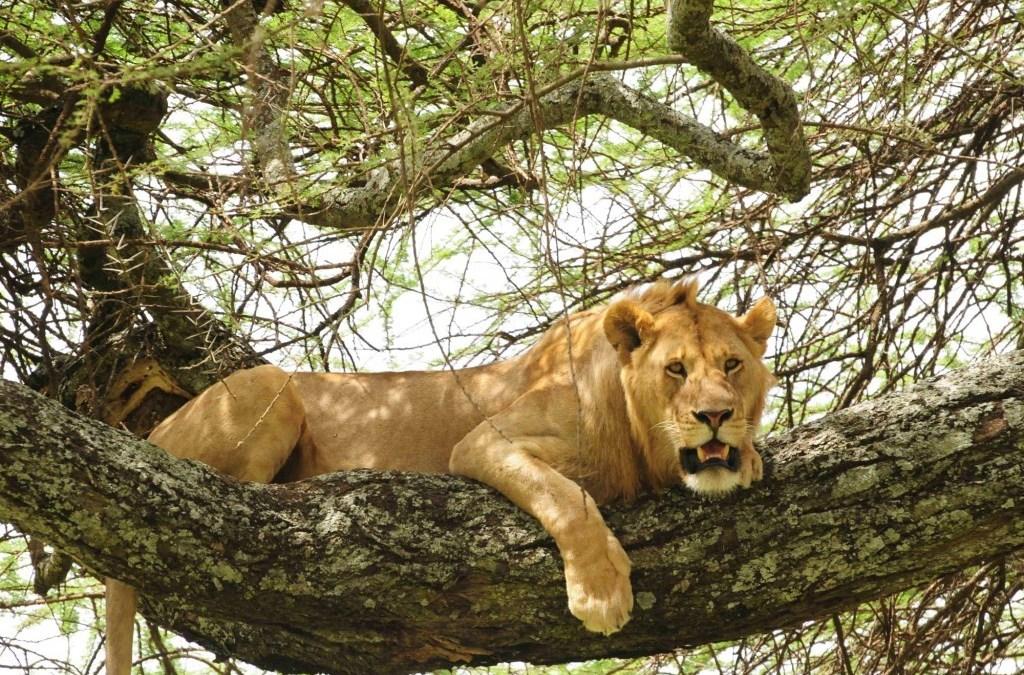 3 Days Camping Safari to Tarangire Ngorongoro and Lake Manyara