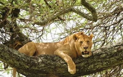 3 Days Camping Safari to Tarangire, Ngorongoro and Lake Manyara