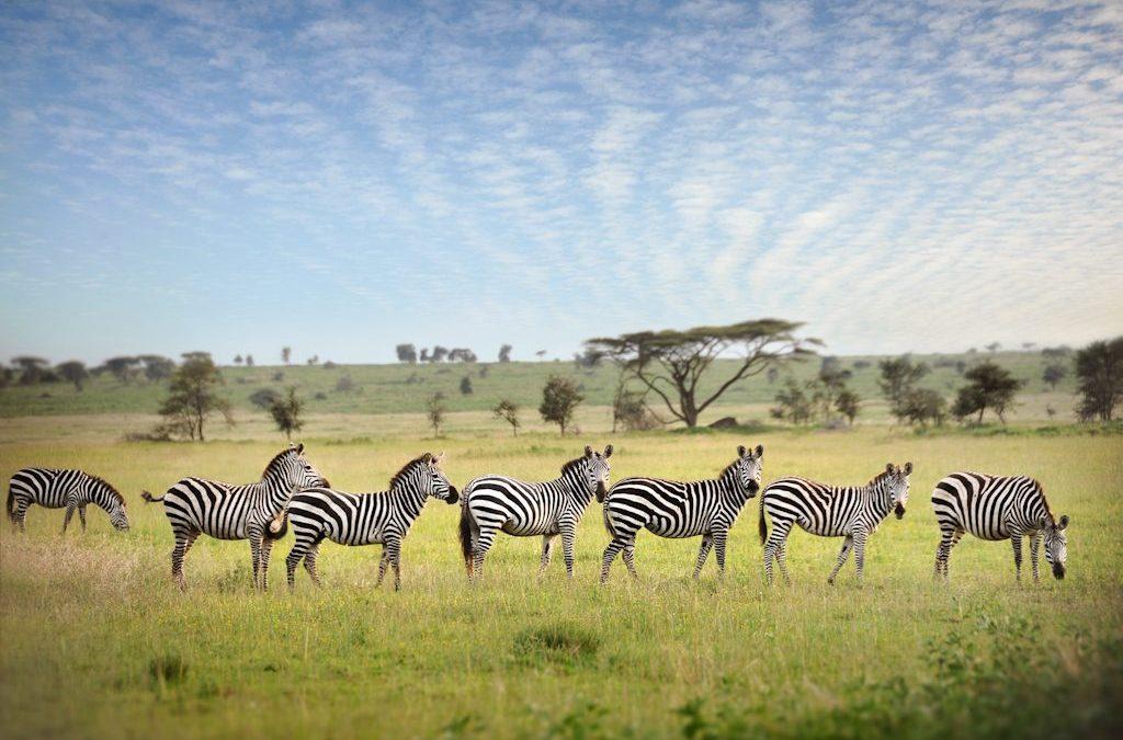 4 Days Camping Safari to Tarangire Serengeti & Ngorongoro Crater