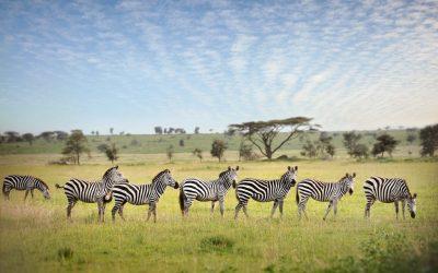 4 Days Camping Safari to Tarangire, Serengeti & Ngorongoro Crater