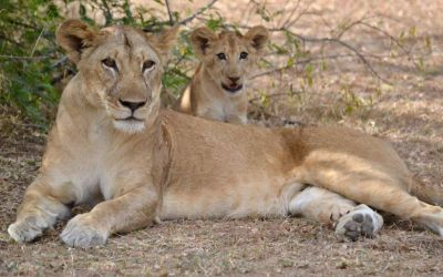 5 Days Tanzania Big Cats Safari In Serengeti National Park