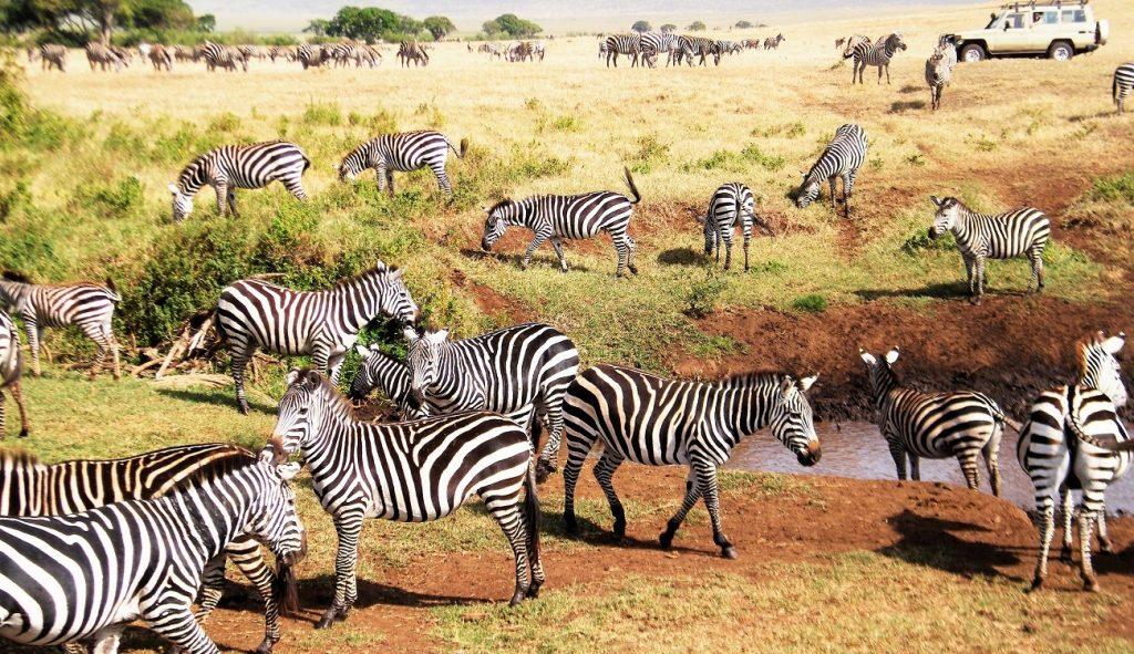 5 Days Tanzania Lodge Safari to Ngorongoro Crater & Lake Manyara