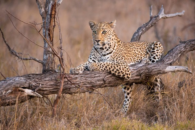 6 DAYS TANZANIA BUDGET TENTED CAMPS SAFARI