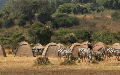 6 Days Budget Mobile Camping Safari to Tanzania