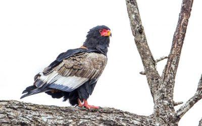 8 Days Best Tanzania  Birds Watching & Walking Safari