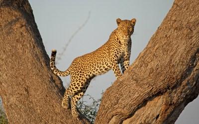 9 Days Best Tanzania Hakuna Matata Safari