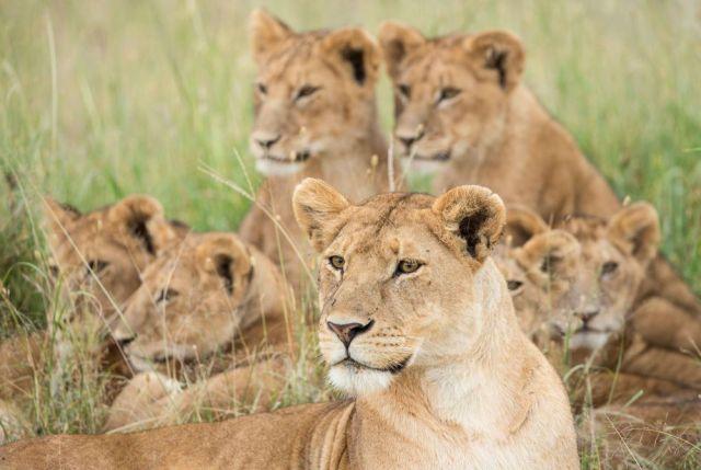 5 DAY TANZANIA BIG CATS SAFARI TO SERENGETI