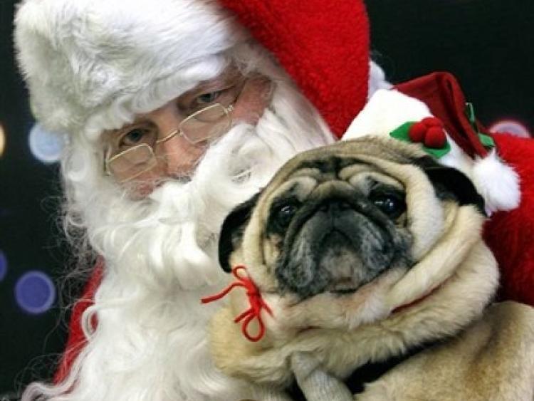 Kilkenny Pugs To Meet Santa Paws On Sunday In Castle