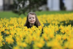 A host of golden daffodils: Sophie Culloty enjoying the children's activities at Killarney House and Gardens
