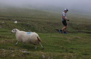 Ewe go one way: a Athletes competitor encounters fog and sheep grazing on Mount Brandon