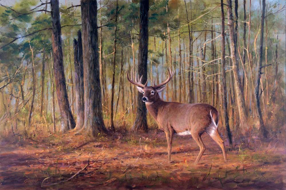 """Woodland Trophy"" Buck White Tailed Deer Painting by Jim Killen"