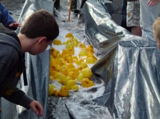 ducks2011_066