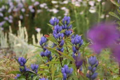 Kilmurry Nursery garden 16