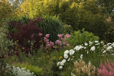 Kilmurry Nursery garden