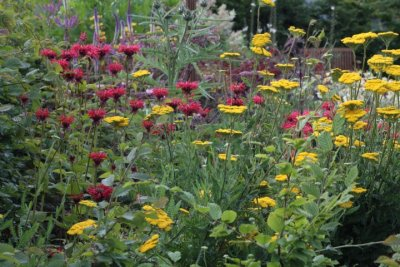 Kilmurry Nursery garden 9