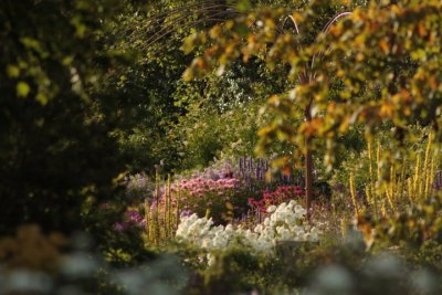 Kilmurry Nursery garden 21