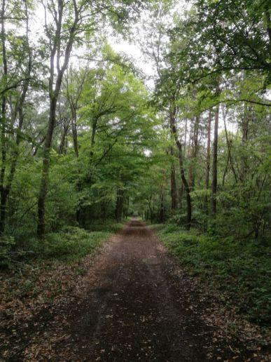 Im Wald von Fertörákos...