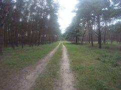 einsam durch den Wald...