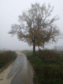 Auch im Nebel weithin sichtbar