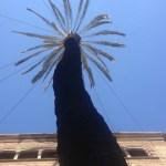 Barcelona Baumpflege mit Kronensicherung