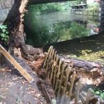Baum Kanal Entsorgung Hamburg