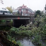 Baum im Kanal wasser Hamburg