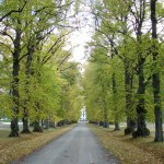 Einfart Verkehrssicherungspflicht und Lichtraumprofilschnitt Hamburg Baumpflege