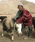 life saving animal release yak YakWithNgaso4