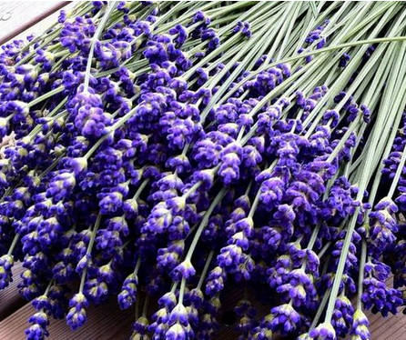 beauty-herbs-lavender