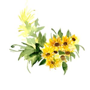 hello-summer-sunflower