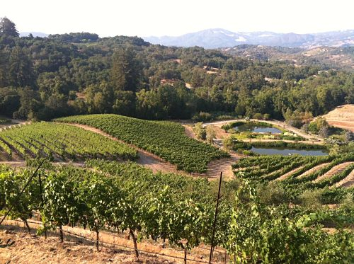 view from benziger family winery guest house