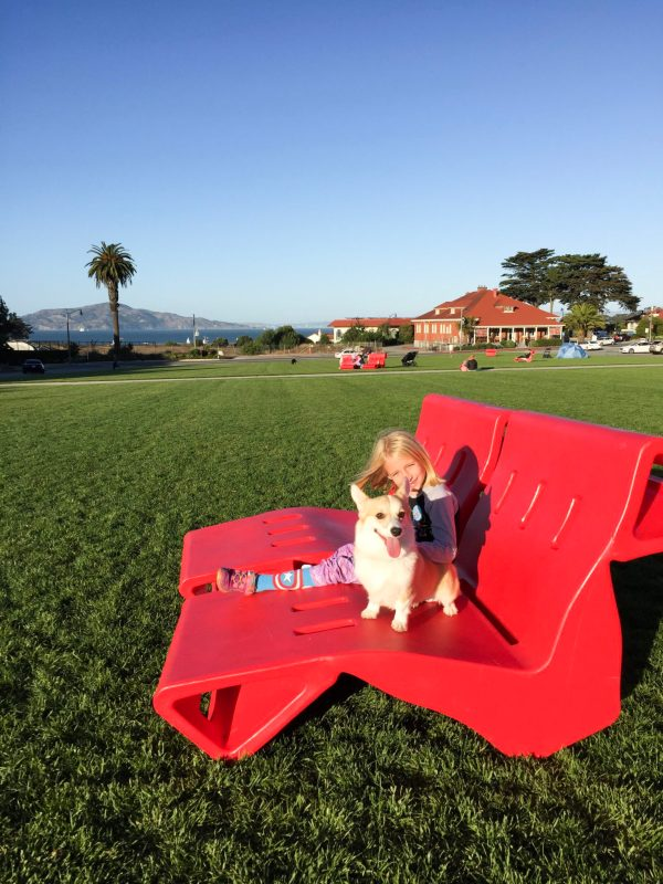 Miss London the Corgi hanging out at the Presidio