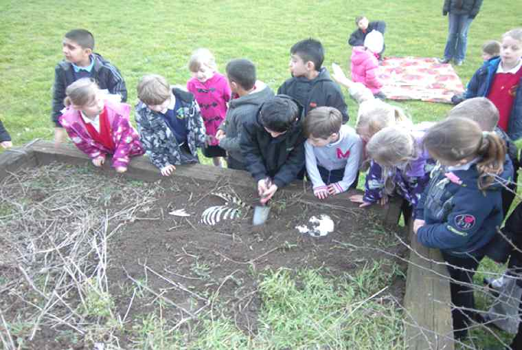 Year 3 Skeleton Investigation and Science work