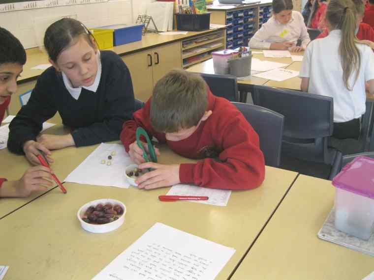 Year 6 have been looking at Darwin's theory of natural selection.