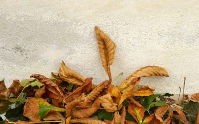 Still Life Photography and Impermanence