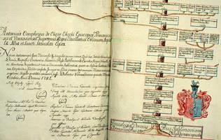 Drzewo genealogiczne - co to jest, jak wygląda