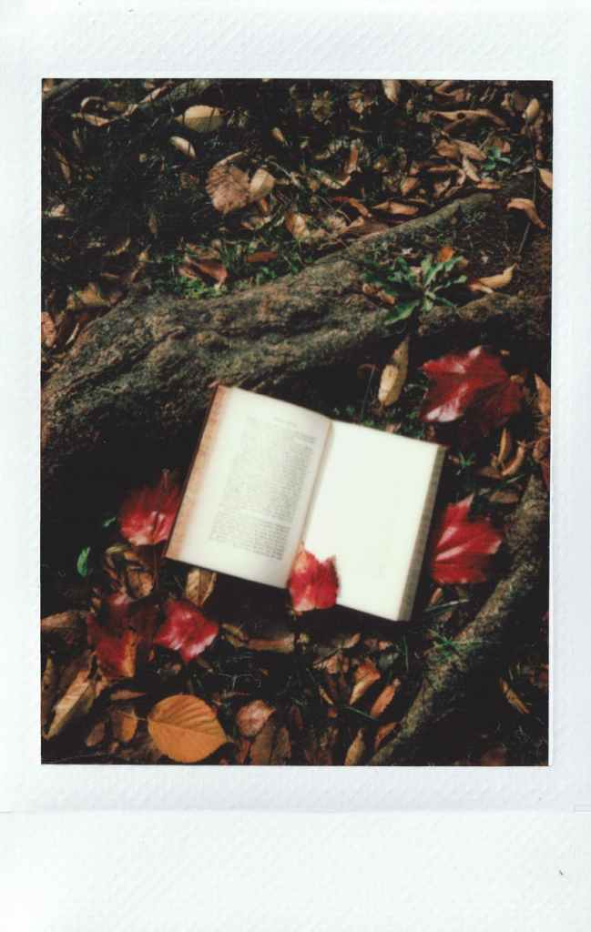 opened book on tree root