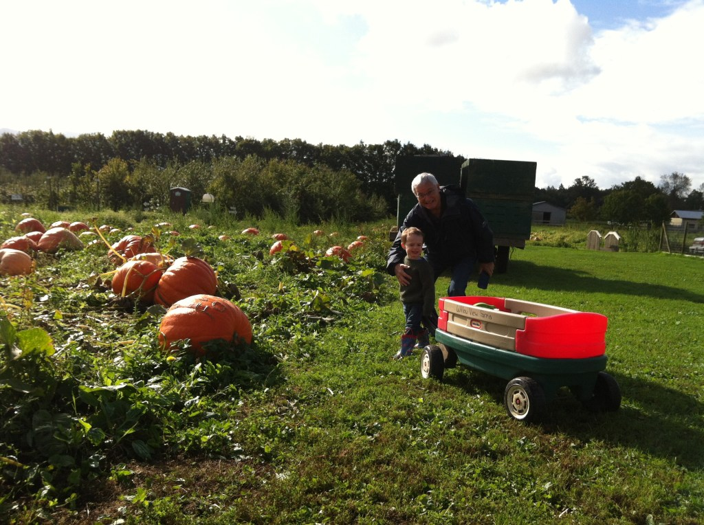 They actually grow pumpkins at Willow View Farms, unlike other farms that create a pumpkin patch by, you know, distributing pumpkins on a grass field.