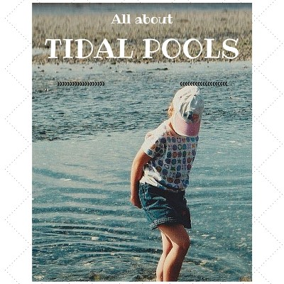 TIDAL POOLS – ZONES