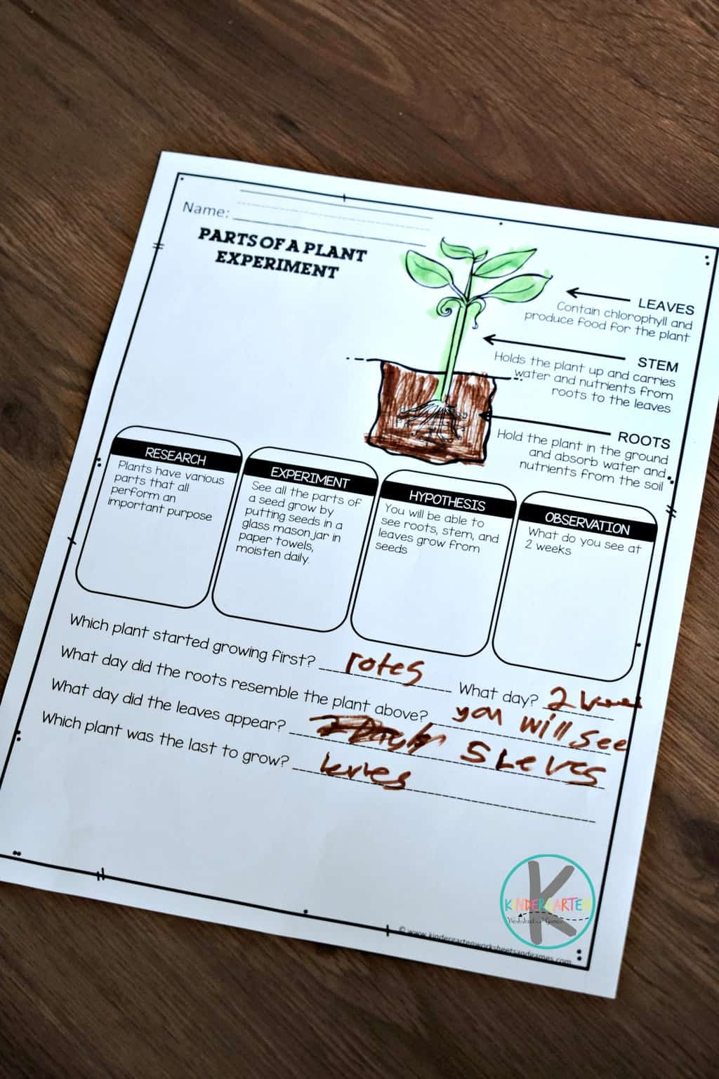 Parts Of A Plant Worksheets Kindergarten Worksheets And