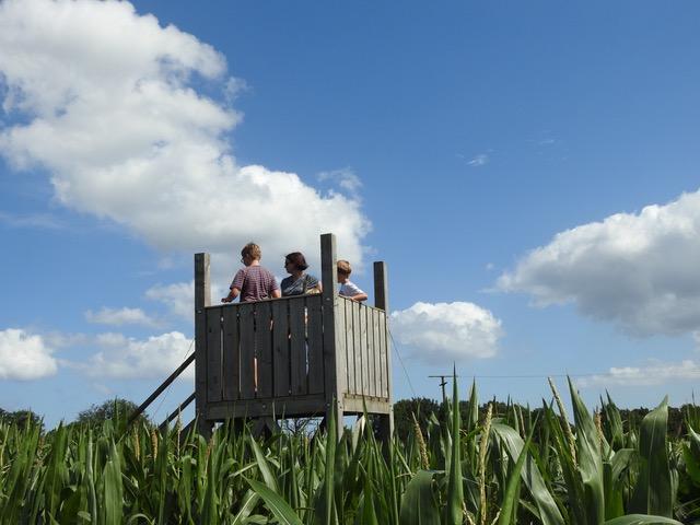Ausguck im Maislabyrinth - Filippos Erlebnisgarten
