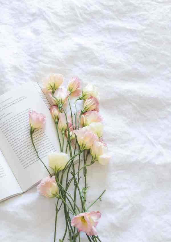 Life Lately- Family, Blogging, & Favorites
