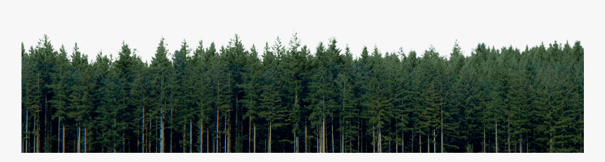 png , tif , fbx, max , jpeg (preview) Transparent Pine Trees Png High Resolution Pine Trees Png Download Kindpng