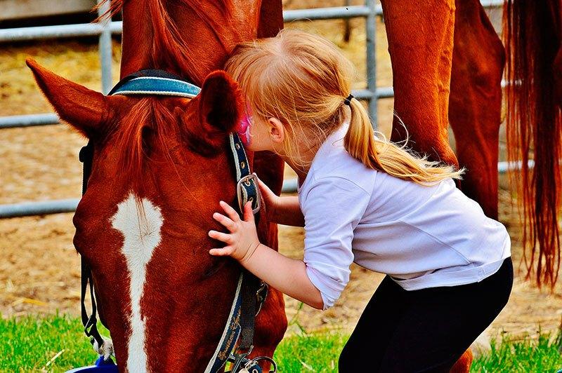 Hipoterapia, El caballo como un amigo en la terapia.